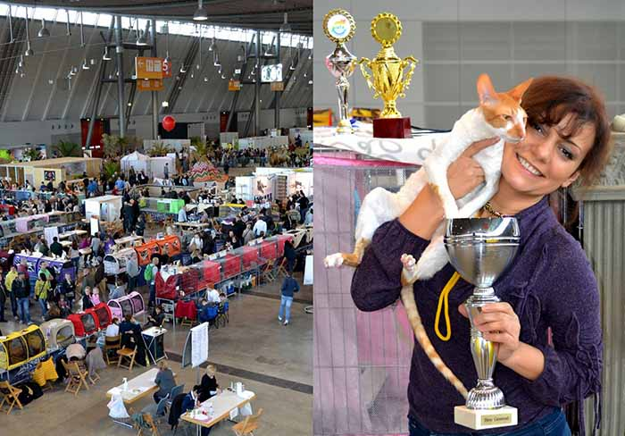 WCF Stuttgart World Cat Show 2015