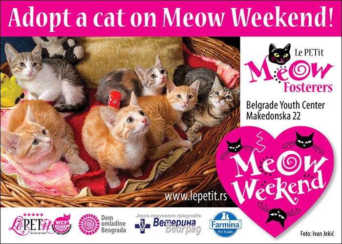Belgrade Meow Weekends